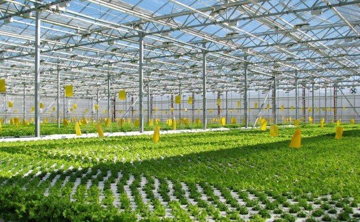 Комплекс подкормки растений углекислотой