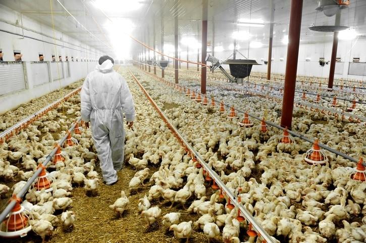 углекислый газ на птицефабриках